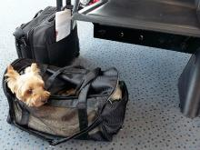 Fluggastrechte: EU soll gemeinsame Standards für Handgepäck festlegen