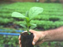 Mit Teakholz-Investments von Life Forestry auf der sicheren Seite
